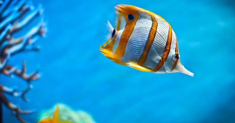 Colágeno de tipo marino