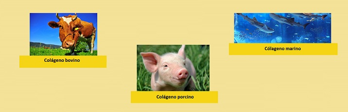 Tipos Colágeno